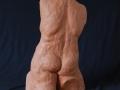 torso B